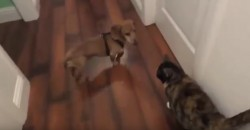 This Dog Loves a Cat – But Her Reaction Is Not So Nice!