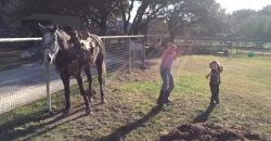 You Have to See, What This Horse Is Doing, While the Girls Are Dancing!