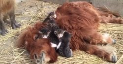 One Pony And Many Kittens, Cuteness Overload!