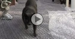 What Happens If Cats Toddle On a Bubble Wrap?