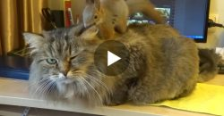 This Cat Gets a Massage From a Squirrel